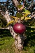 apple foreground